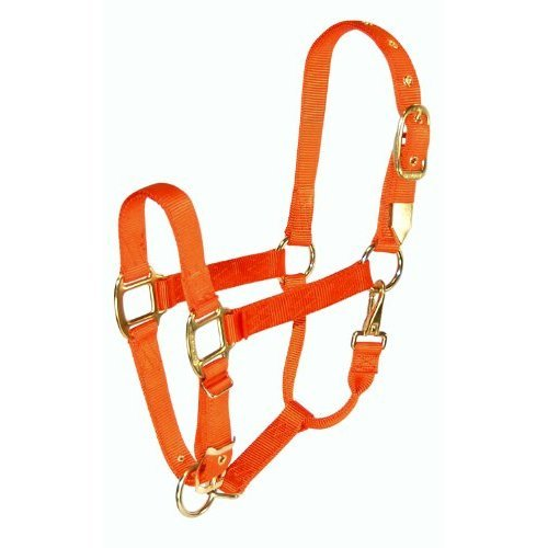 Hamilton 1-Inch Nylon Halter with Adjustable Chin, Orange - Average Size