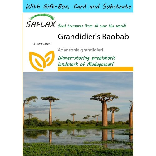 Saflax Gift Set - Grandidier's Baobab - Adansonia Grandidieri - 2 Seeds - with Gift Box, Card, Label and Potting Substrate