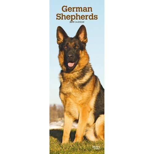German Shepherds 2019 Slim Calendar