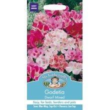 Mr Fothergills - Pictorial Packet - Flower - Godetia Dwarf Mixed - 1000 Seeds