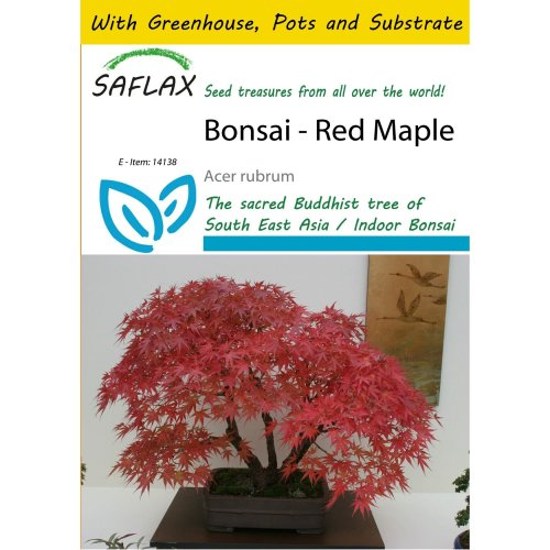 Saflax Potting Set - Bonsai - Red Maple - Acer Rubrum - 20 Seeds - with Mini Greenhouse, Potting Substrate and 2 Pots