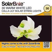 Solar Brite Deluxe 30 LED Calla Lily Solar Fairy String Lights, Warm White