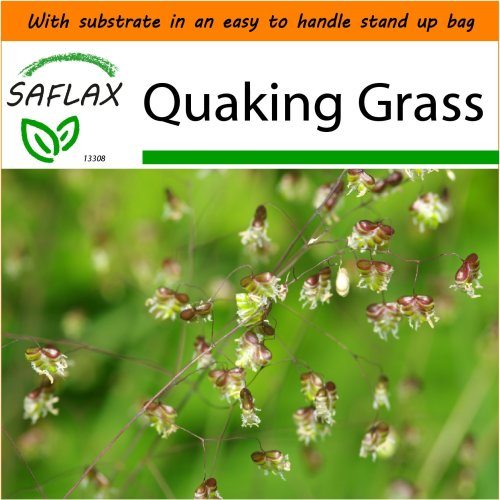SAFLAX Garden in the Bag - Quaking Grass - Briza - 75 seeds