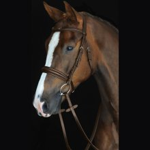Collegiate Mono Crown Padded Raised Cavesson Bridle: Brown: Warmblood
