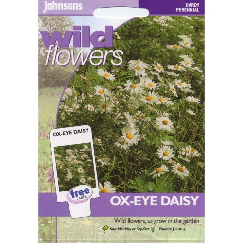 Johnsons Seeds - Pictorial Pack - Flower - Wildflower Ox Eye Daisy - 750 Seeds