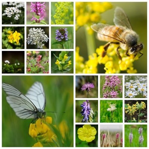 RP Seeds British Native Wildflower Seeds - Bee & Butterfly Mix - 2g