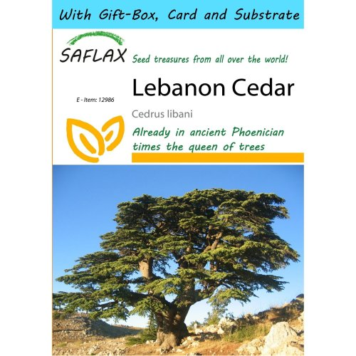 Saflax Gift Set - Lebanon Cedar - Cedrus Libani - 20 Seeds - with Gift Box, Card, Label and Potting Substrate