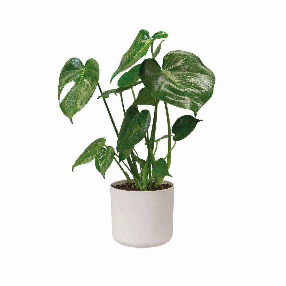 6c1de85fa10 ... Elho b.for soft round 22cm flowerpot - white - 2 ...