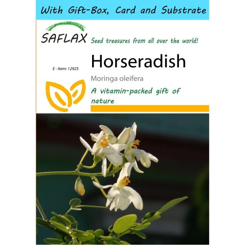 Saflax Gift Set - Horseradish - Moringa Oleifera - 10 Seeds - with Gift Box, Card, Label and Potting Substrate