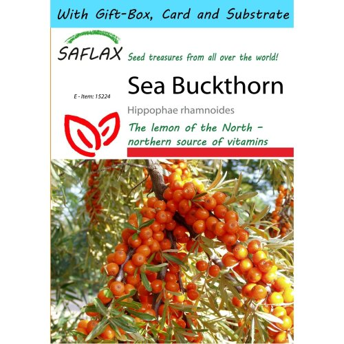 Saflax Gift Set - Sea Buckthorn - Hippophae Rhamnoides - 40 Seeds - with Gift Box, Card, Label and Potting Substrate